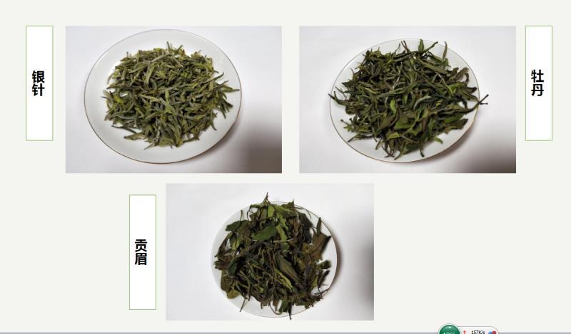 汉中西乡白茶试制成功 填补我省茶品种空白